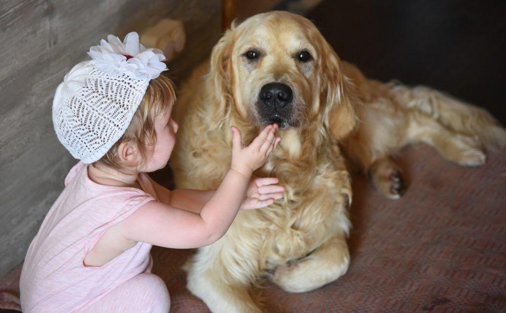 CBD für Haustiere - Kind mit Hund